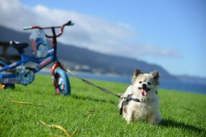 Doggy with Bicycle