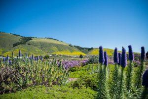 Vegetation Photographs