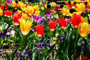 Flowers Photographs